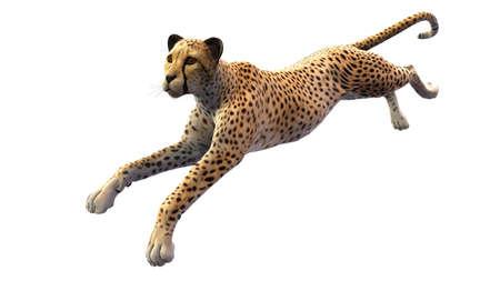 Cheetah running, animal isolated on white background