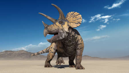Triceratops, dinosaur reptile, prehistoric Jurassic animal roaring in deserted nature environment, front view, 3D illustration