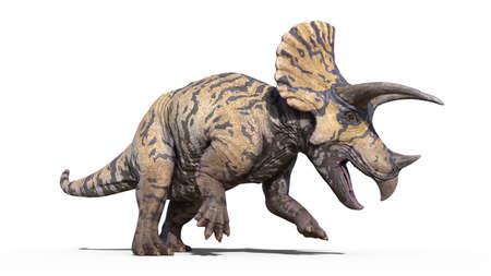 Triceratops, dinosaur reptile stomping, prehistoric Jurassic animal isolated on white background, 3D illustration