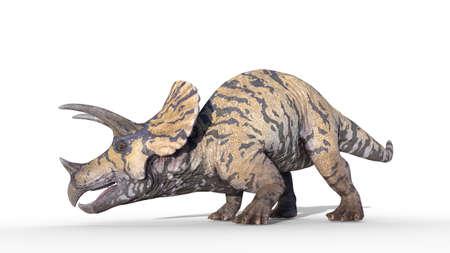 Triceratops, dinosaur reptile crawling, prehistoric Jurassic animal isolated on white background, 3D illustration 免版税图像
