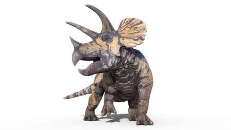 Triceratops, dinosaur reptile, prehistoric Jurassic animal roaring on white background, front view, 3D illustration