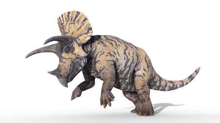 Triceratops, dinosaur reptile prancing, prehistoric Jurassic animal isolated on white background, 3D illustration 免版税图像