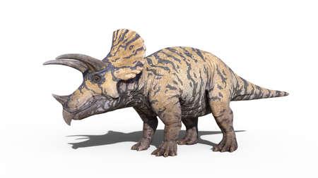 Triceratops, dinosaur reptile standing, prehistoric Jurassic animal isolated on white background, 3D illustration