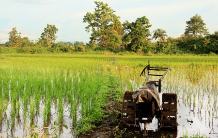 filed: rice field with tracter landscape