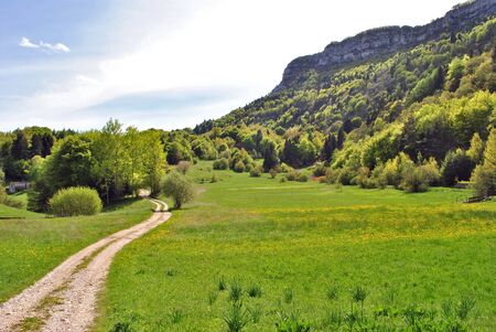 meadows of grass and spring flowers with pine and larch farm road in the valleys of Trentino Stock Photo