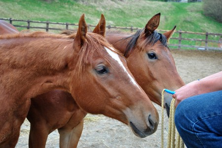 lactation: baby horse farm a few days after birth by breastfeeding mothers and unstable equilibrium