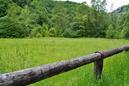 lawn with fence grass green with forest edges in spring Stock Photo - 7053149