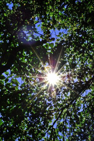 against the sun through the branches and leaves of the forest Stock Photo - 7138623