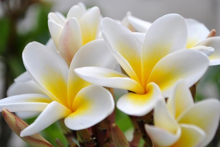 flower color with aromas and flavors of spring photo