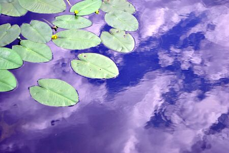 Plant waterlilies in the pond water clean photo