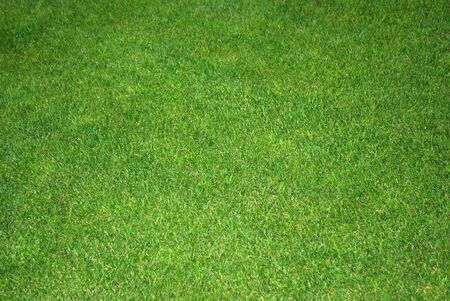 lawn green and nice Stock Photo