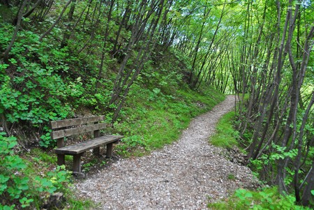underbrush: bench in the gravel path surrounded by pine trees and underbrush Stock Photo