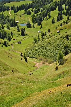 barn wood in Val di Fassa in the Italian Dolomites photo