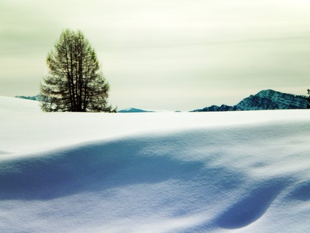 winter landscape with snow and pine trees, cloudy sky background