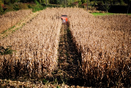 thresher in the field of corn in autumn photo