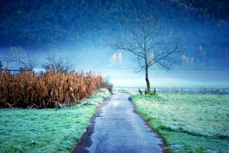 tree surrounded by fog in the morning Stock Photo - 8205074