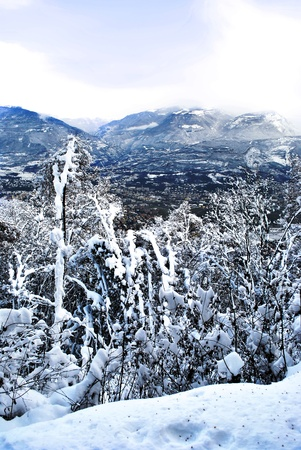 conifer forest in winter with snow in the Italian mountains photo