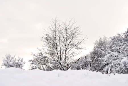 winter landscape with trees covered in snow Stock Photo - 8411702