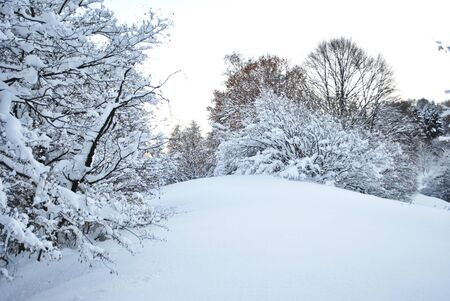 winter landscape with trees covered in snow Stock Photo - 8484644