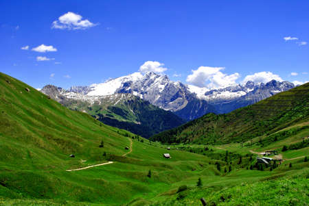 grass and mature in the green valleys of Trentino photo