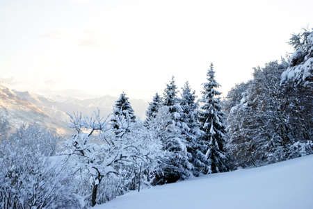 blanketed: winter landscape with snow-blanketed forest Stock Photo
