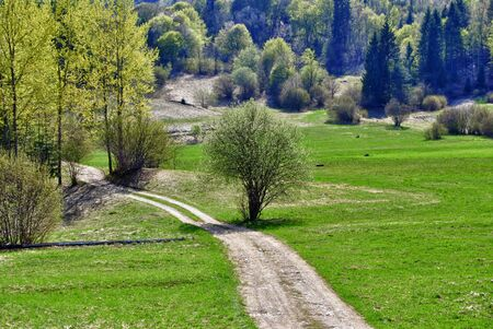 larch forest and meadows in the spring, with road Stock Photo - 9299785