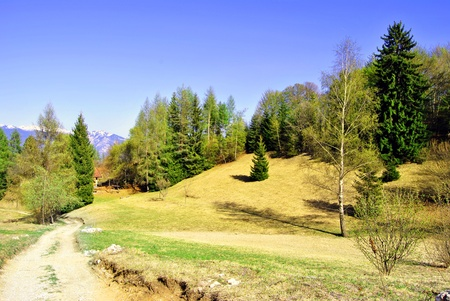 larch forest and meadows in the spring, with road photo