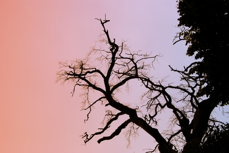 A dead tree against a blue sky Stock Photo - 9478092