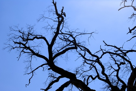A dead tree against a blue sky Stock Photo - 9478107