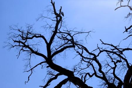 A dead tree against a blue sky Stock Photo - 9478107