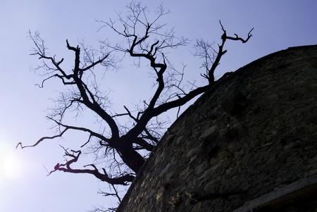 A dead tree against a blue sky Stock Photo - 9552255