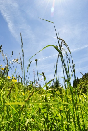 spring field and blue sky Stock Photo - 9956625