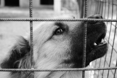 animal shelter: closeup of a dog cage