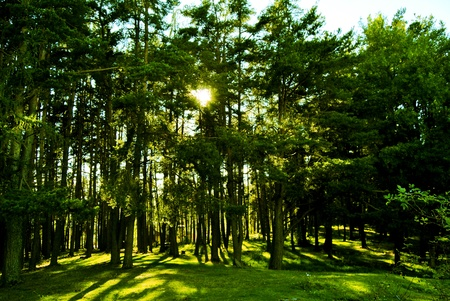 sunlight rays in the forest. In Renon, Italy, South Tyrol  photo