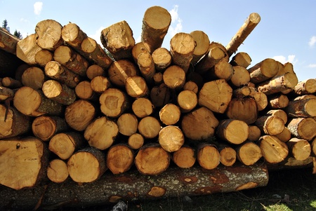 Large pile of cut wooden logs in pine forest for renewable energy. In Italy, Trentino Tyrol photo