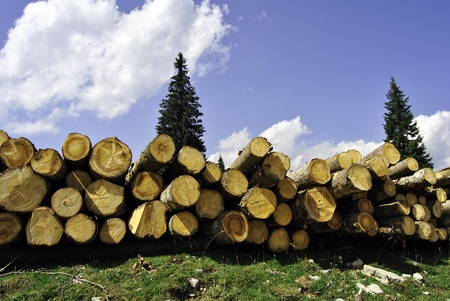 Large pile of cut wooden logs in pine forest for renewable energy. In Italy, Trentino Tyrol
