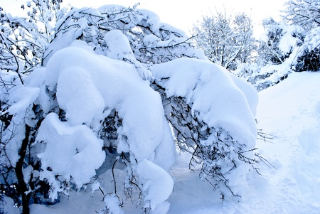 sudtirol: Winter trees in mountains covered with fresh snow, in Trentino Sudtirol. Italy