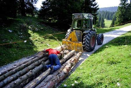 freightliner: laden tractor cut logs on the road