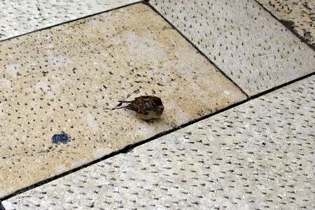 Brick footpath background, with sparrow photo