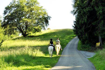 Horse promenade  Stock Photo