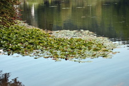 lake with water lilies photo