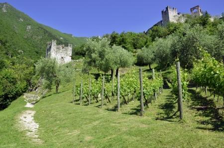 Scenic on fresh vineyards under deep blue sky Stock Photo - 15114418