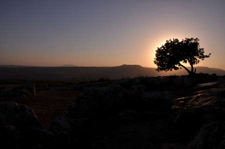 galilee: the lonley tree at the summit of arbel mountain above the galilee sea,