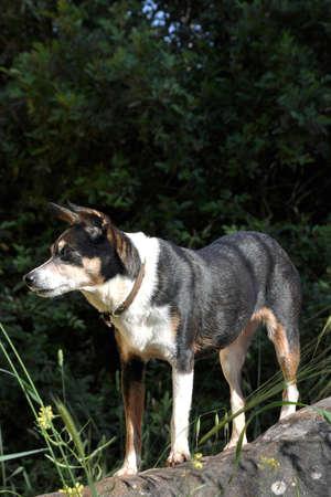 dog rock: female dog on rock