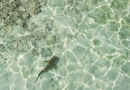 babie: Just a Babie Shark in the Indian Ocean