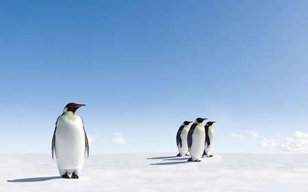 pinguins: Les manchots empereurs en Antarctique Banque d'images
