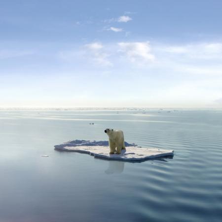 Un oso polar conseguido que en uno de los últimos témpanos de hielo flotando en el mar Ártico.  Foto de archivo