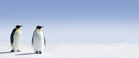 Penguins standing in the snow with lots of copy space Stock Photo