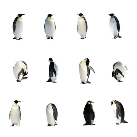 A collection of isolated penguins