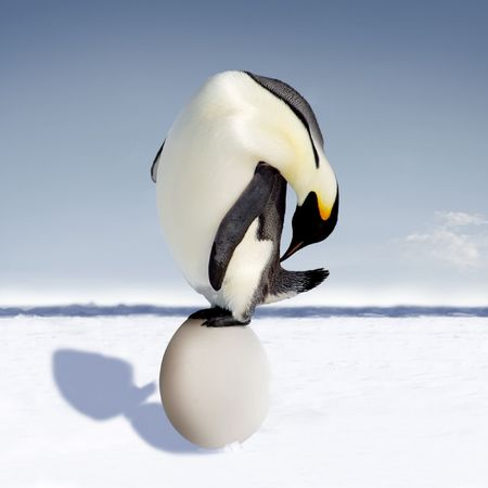 Penguin is astonished about its mutant egg which it just laid